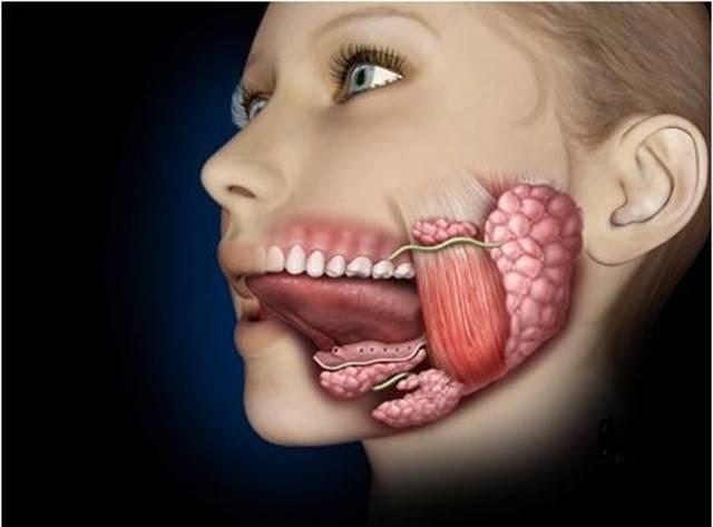 Что делать при воспалении уздечки языка или формировании шишки?