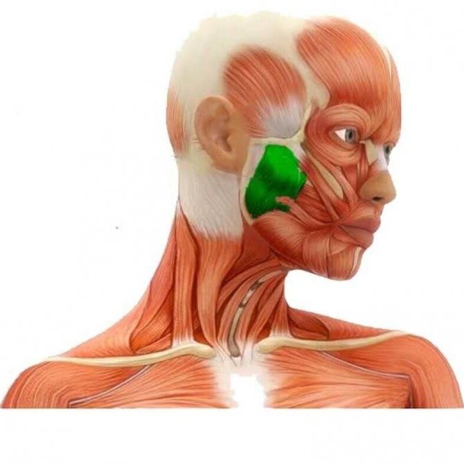 Тризм жевательной мускулатуры