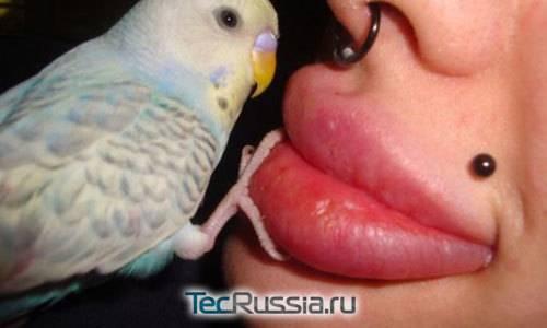 Кристина рей: все теломодификации, фото до и после операции. творчество и жизнь обладательницы самых больших губ