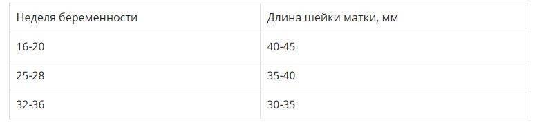 Длина шейки матки при беременности на 19 неделе
