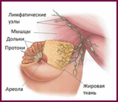Аксиллярные лимфоузлы: функции, воспаление, диагностика и лечение