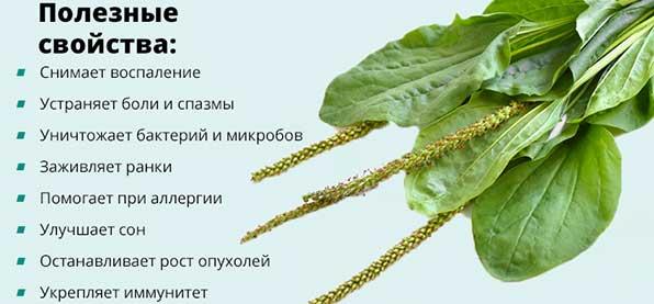 Семена подорожника при бесплодии отзывы