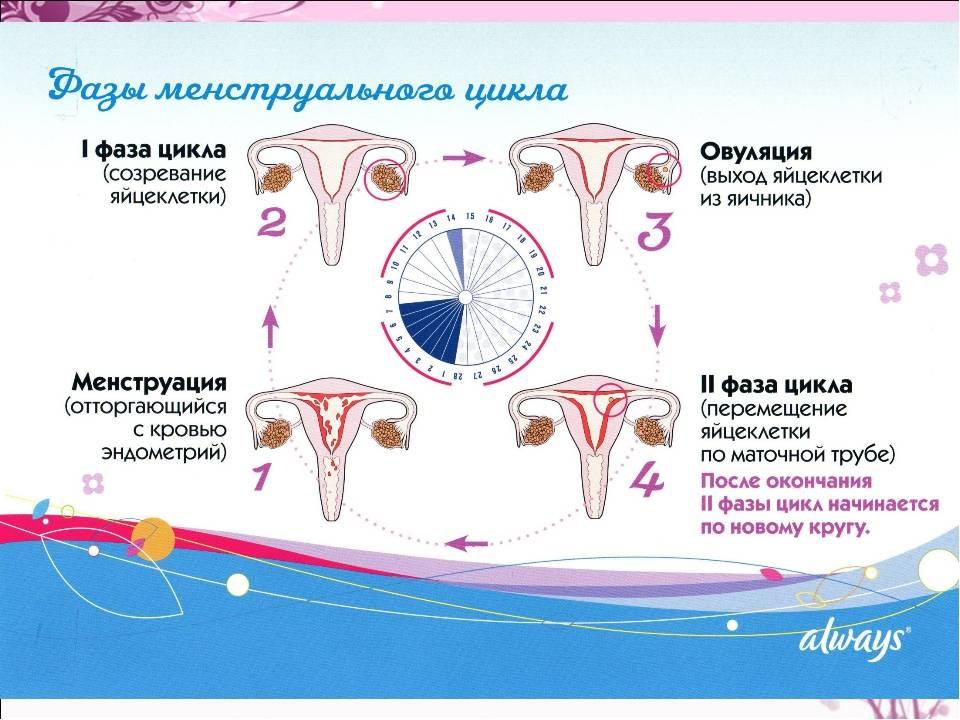 Менструальный цикл укоротился