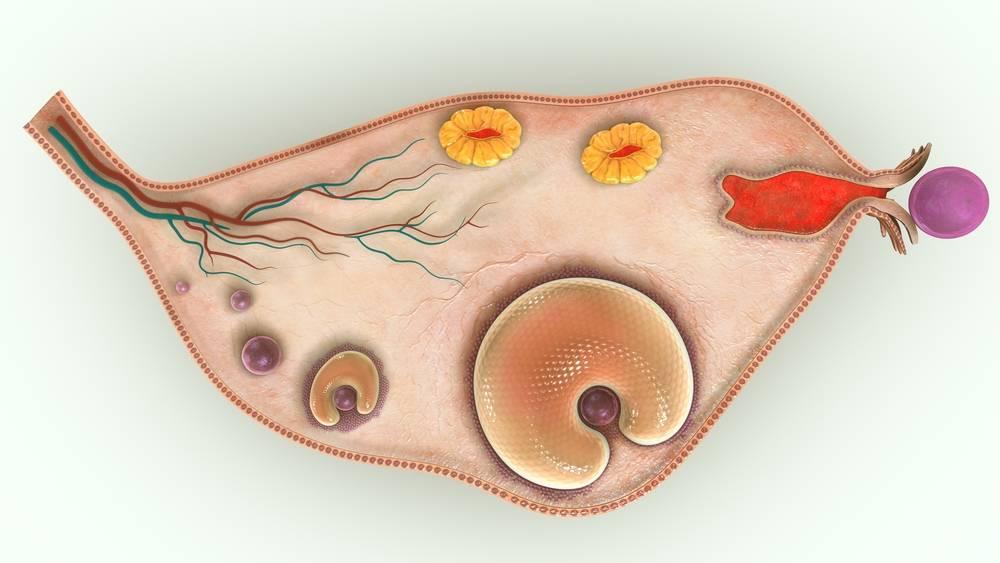 Опасна ли киста желтого тела при беременности?