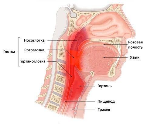 Чем лечить химический и термический ожог слизистой рта