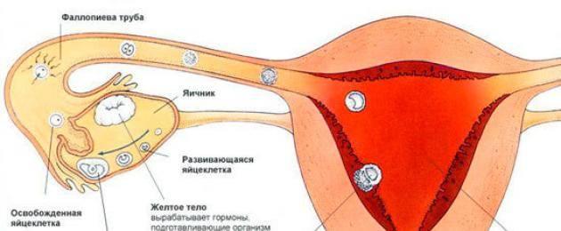 Причины набухания груди после менструации
