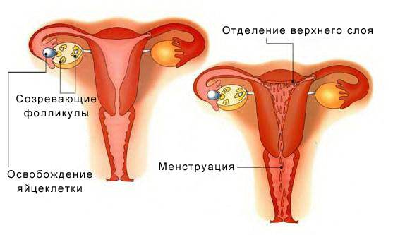 Причины бессонницы перед менструацией