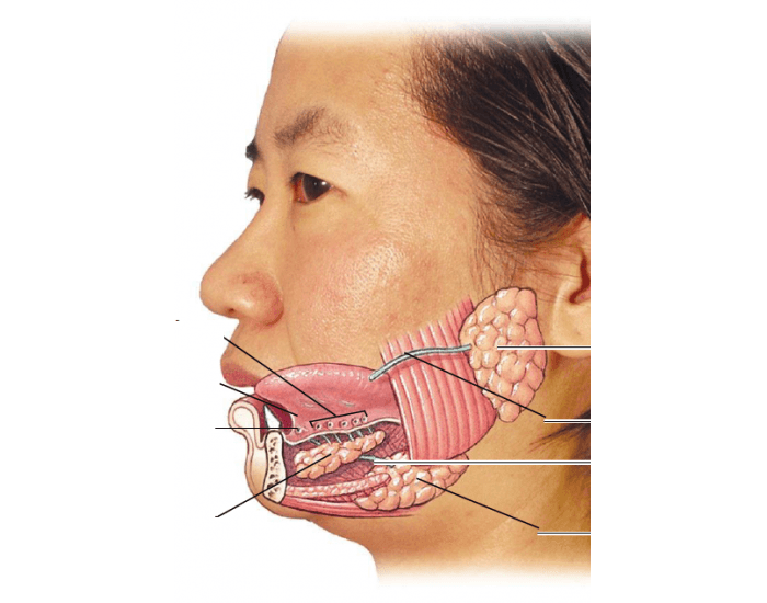 Причины увеличения слюнных желез и возможные патологии