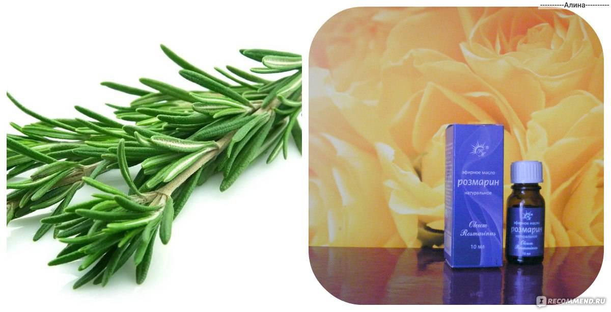 Масло розмарина для волос: свойства и применение