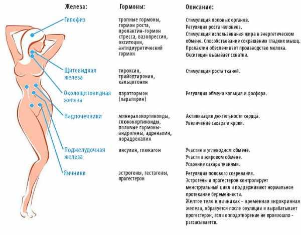 Названия гормональных таблеток и показания к применению. что лечат гормональными таблетками