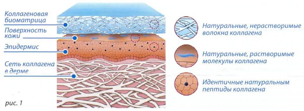 Гиалуроновая кислота, как принимать. как использовать гиалуроновую кислоту для молодости кожи
