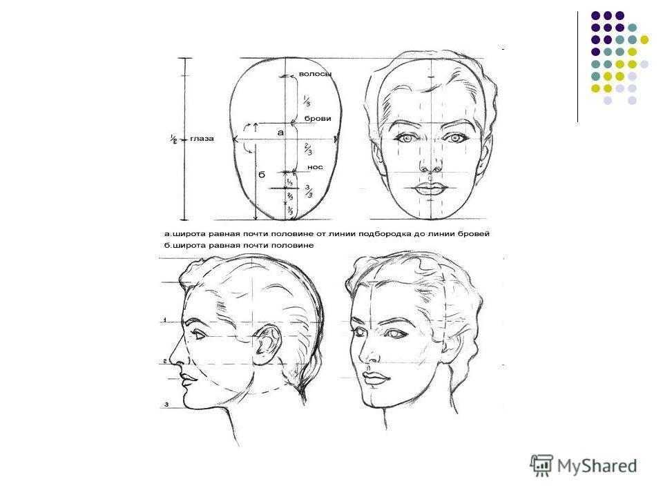 Пропорции человека для рисования