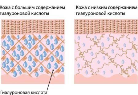Вкаких продуктах содержится гиалуроновая кислота
