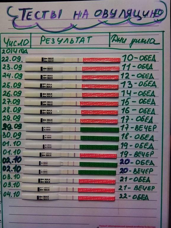 Определение овуляции: домашние тесты на овуляцию