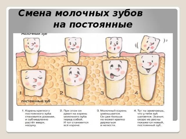 Во сколько лет начинают выпадать молочные зубы