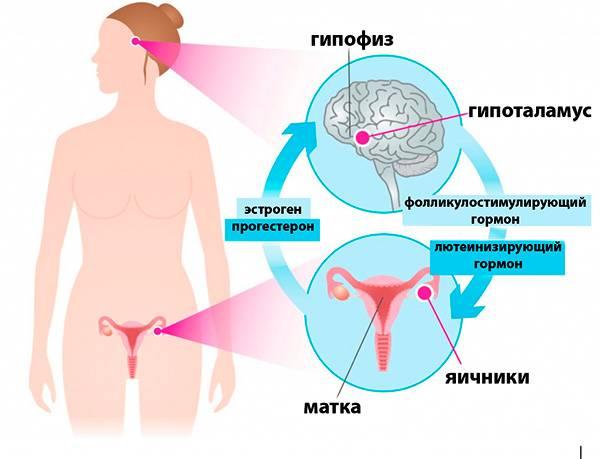 Тренировочный план в рамках менструального цикла