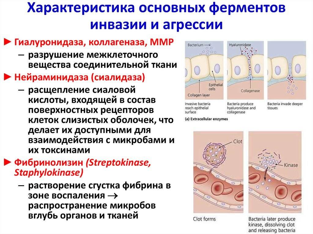 Какими препаратами лечить болезнь пейрони