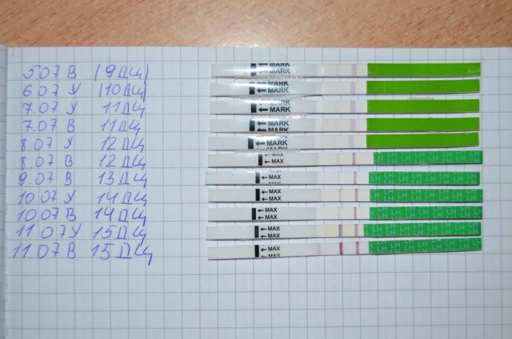 Когда будет овуляция, если тест на овуляцию показал две полоски?