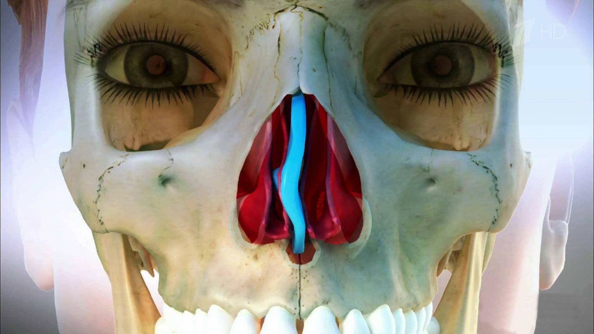 Искривления перегородки носа: симптомы и лечение