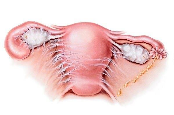 Операция лабиопластика без прикрас: развенчиваем мифы