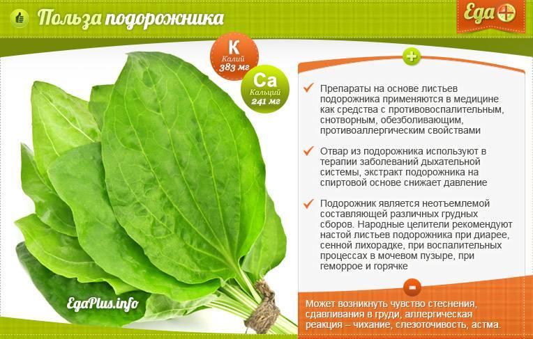Семена подорожника лечебные свойства для мужчин