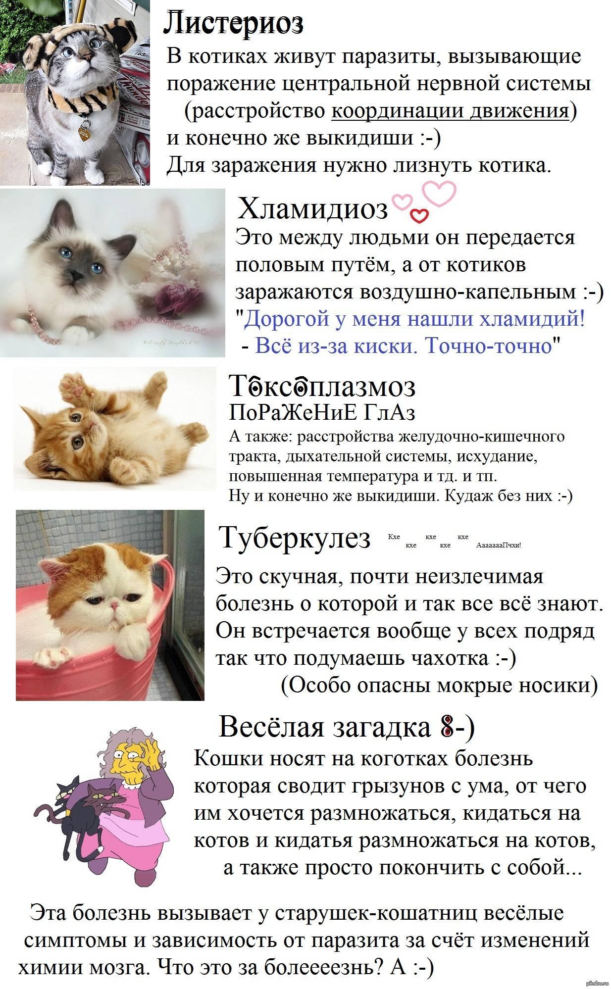 Болезни зубов у кошек: симптомы и лечение