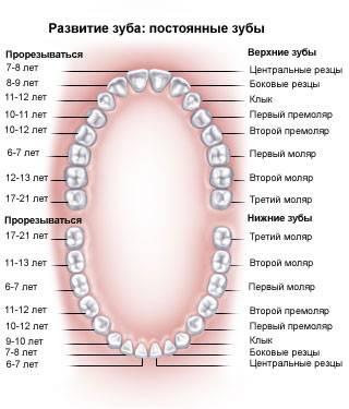Почему болят и ноют передние нижние зубы
