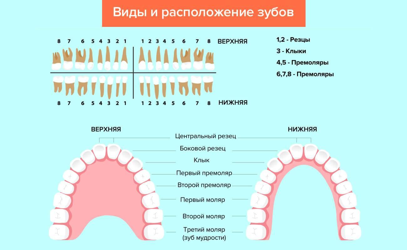 Как в стоматологии нумеруются зубы