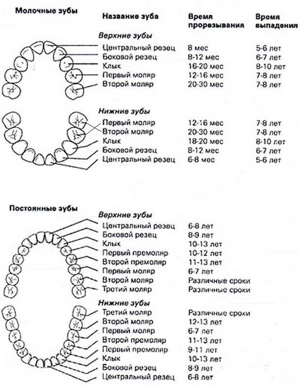 Сколько молочных зубов должно быть у ребенка в 2 года