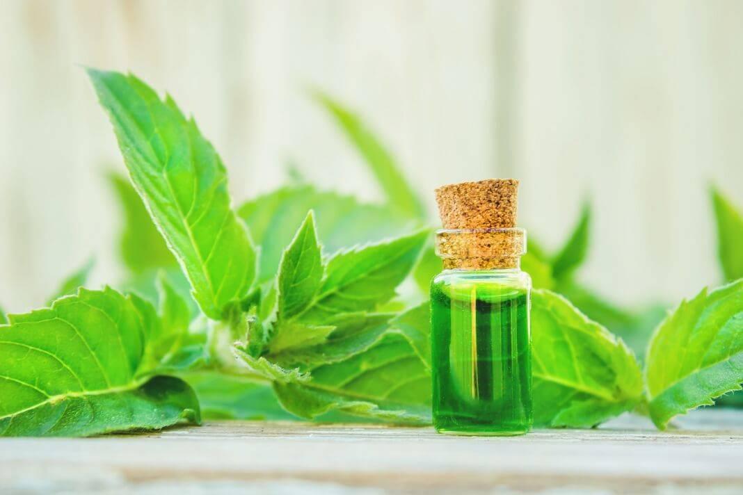 Эфирное масло мяты для лица, свойства и применение