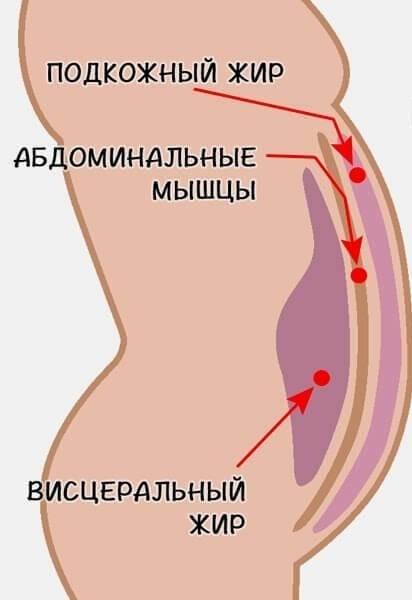 Как избавиться от жира внизу живота — научный метод похудения