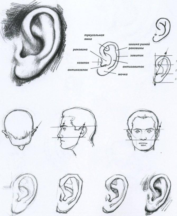 Как определить пропорции и форму лица