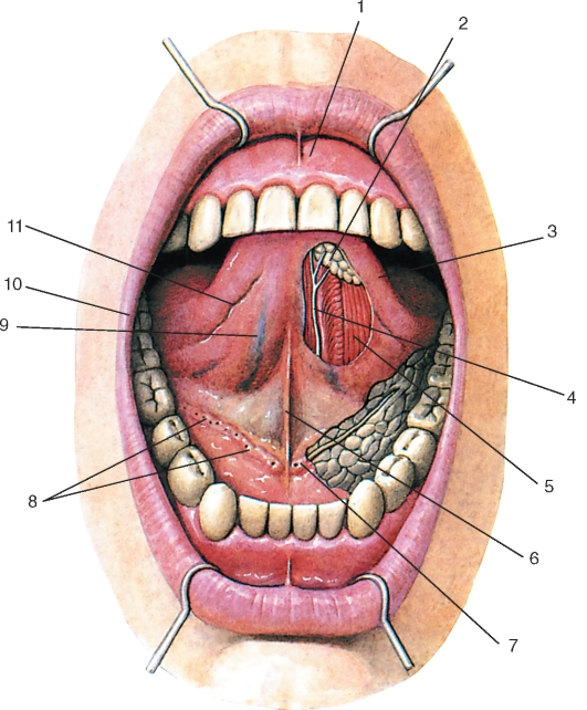 Сиалоаденит околоушной слюнной железы — лечение, виды и симптомы
