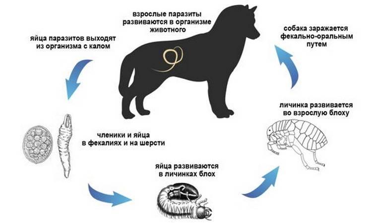 Гингивит у кошек: симптомы и лечение