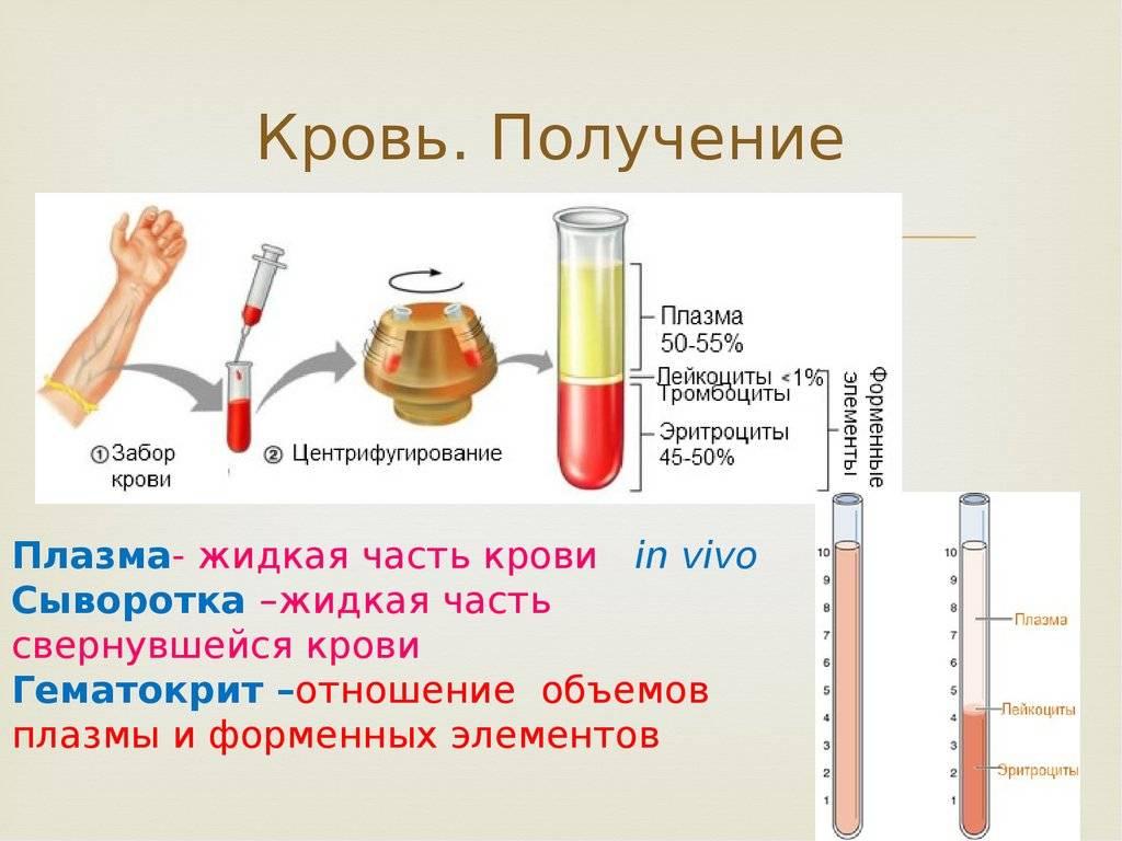 Плазма крови: что это, состав и функции жидкой части, заболевания, при которых меняются ее свойства