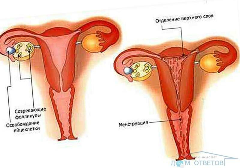 Противозачаточные таблетки при миоме матки: как это работает?