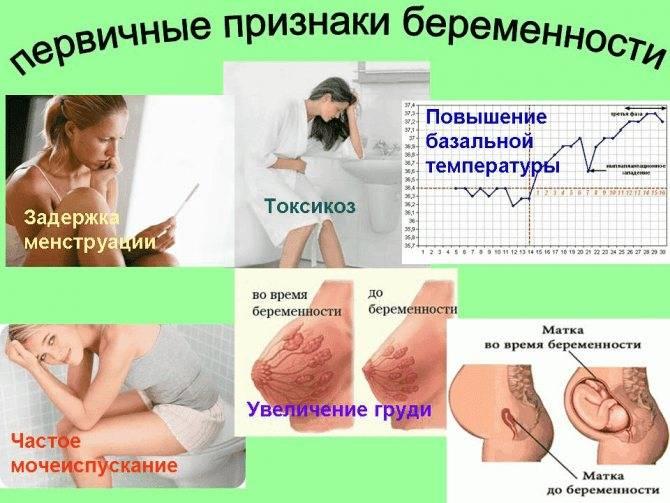 Не болит грудь на ранних сроках беременности