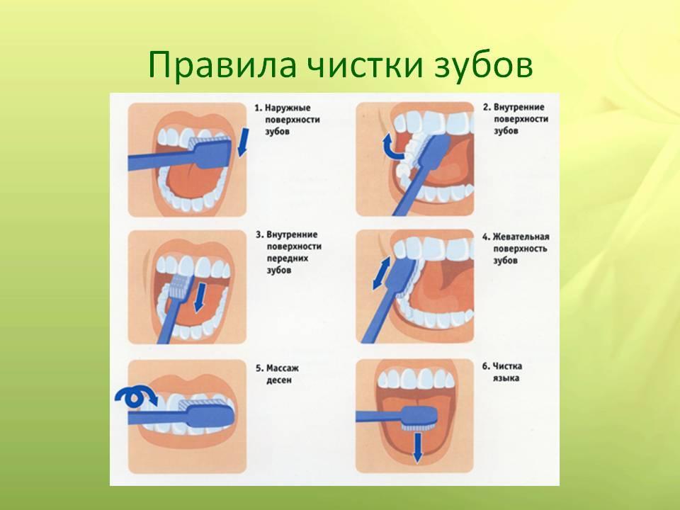 Сколько раз в день нужно чистить зубы, чтобы сохранить их здоровыми