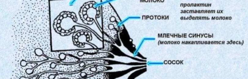Какие признаки сопровождают задержку менструации при менопаузе