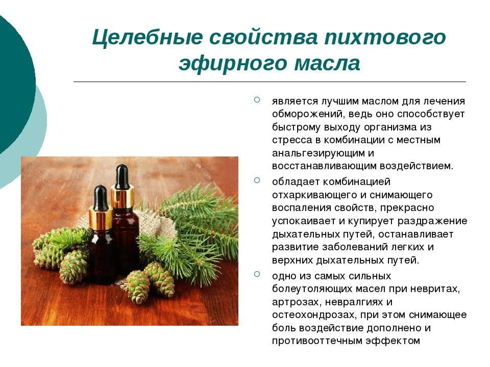 Эфирное масло хвои: виды, свойства, сферы применения