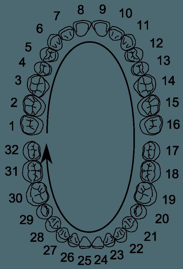 Нумерология в стоматологии