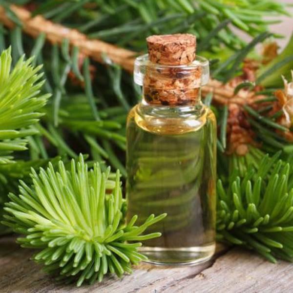 Эфирное масло сосны: свойства и применение