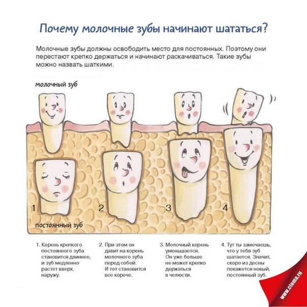 Что делать, если на зубе или штифте шатается коронка: причины и способы устранения проблемы