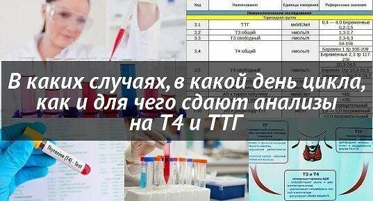 Сдаем гормональные анализы