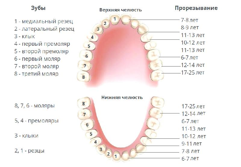 Симптомы и последовательность прорезывания зубов у ребенка