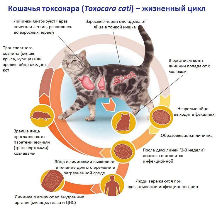 Болезни зубов у кошек симптомы и лечение