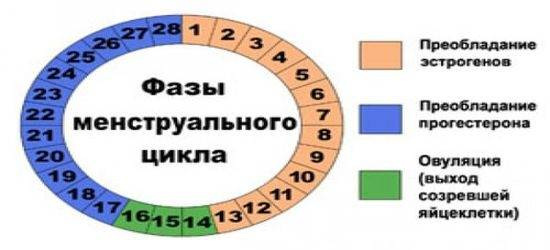 Сроки овуляции при 28 дневном цикле