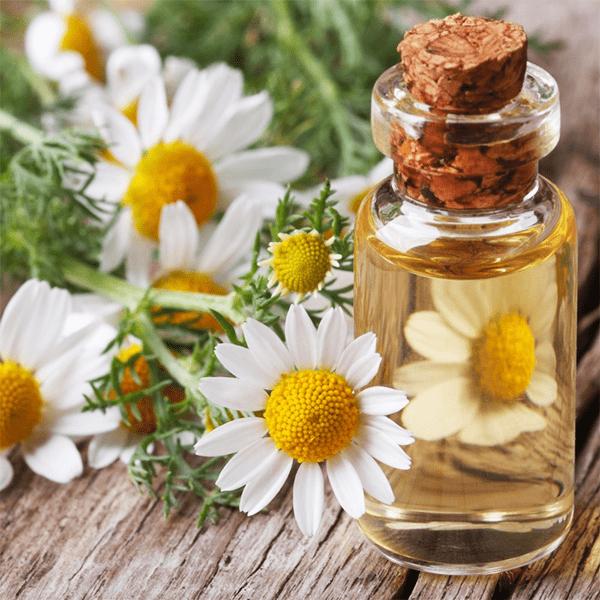 Эфирное масло ромашки и его свойства