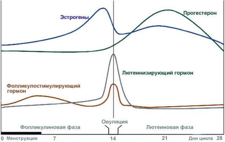 Эстроген «на нуле»? как повысить его уровень в организме до нормы?