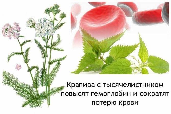 Более 10 рецептов кровоостанавливающих травяных настоев и отваров при обильных месячных